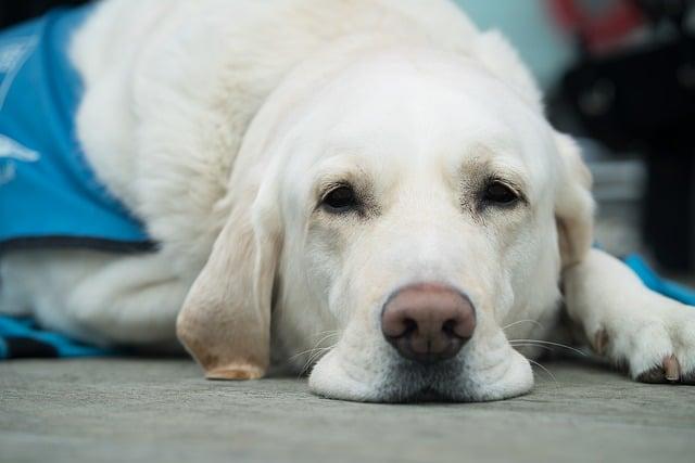 Tag des Blindenhundes